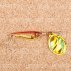 Блесна вращающаяся DAIWA Silver Creek Spinner R 1060 C / Holo Akakin (0226)
